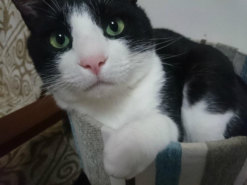 目指せタレント猫