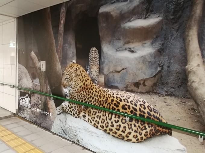 Huawei P10 カメラを試す(その1)@福岡市立動物園