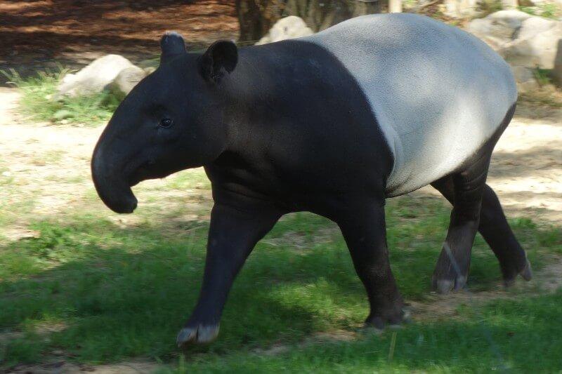 2016年 フランス旅行記〜5日目 パリ動物園