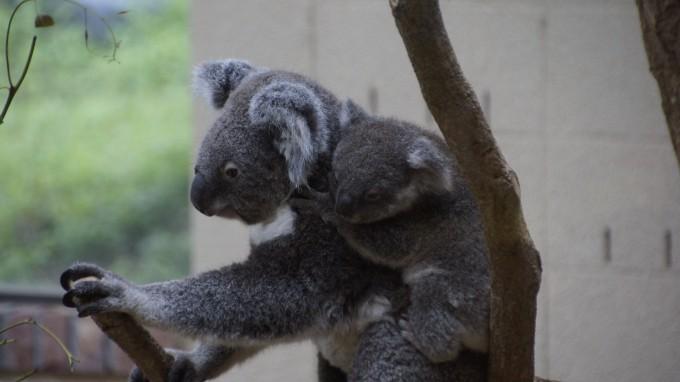 初夏の動物園は赤ちゃん三昧でした