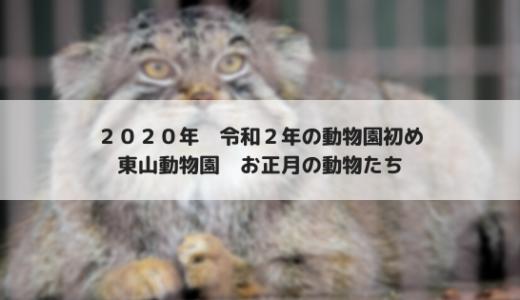 2020年のお正月は東山動物園で動物園初め