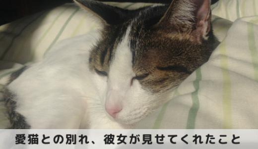 愛猫との別れ、彼女が最期に私に残してくれたこと