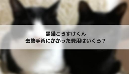 愛猫の去勢手術にかかる費用はいくら?我が家の場合をご紹介