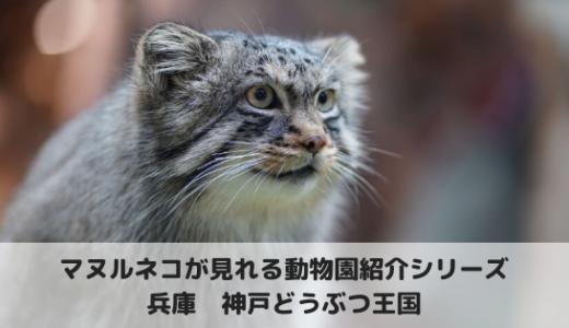 マヌルネコに会える動物園~神戸どうぶつ王国編
