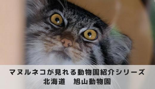 マヌルネコに会える動物園~旭川市旭山動物園編