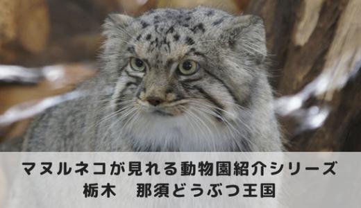 マヌルネコに会える動物園~那須どうぶつ王国編