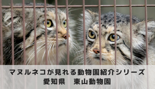 マヌルネコに会える動物園~名古屋市東山動物園編