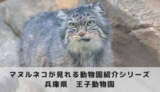 マヌルネコに会える動物園~神戸市立王子動物園編