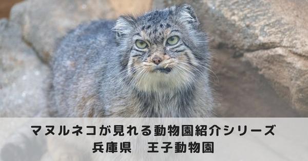 マヌルネコ 日本