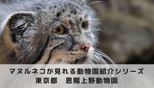 マヌルネコに会える動物園~恩賜上野動物園編