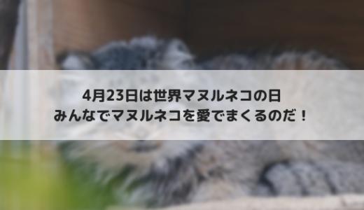 4月23日は「国際マヌルネコの日(International Pallas's cat day)」に決定!
