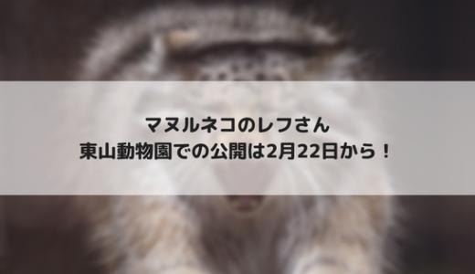 東山動物園 マヌルネコのレフさんを2月22日から公開!