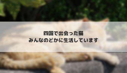 【四国旅行3】四国の野良猫を撮影してきました