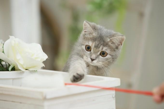 子猫を迎えることになったら何を準備すればいいの?